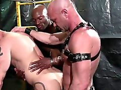 Stud barebacks black cock