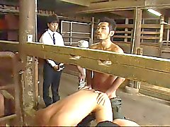 (New Sexual) Gay Milk Farm-02