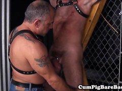 bareback gay os ursos homossexual gay alegres