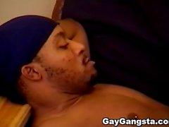 gaygangsta iso homo homo gangsta gay